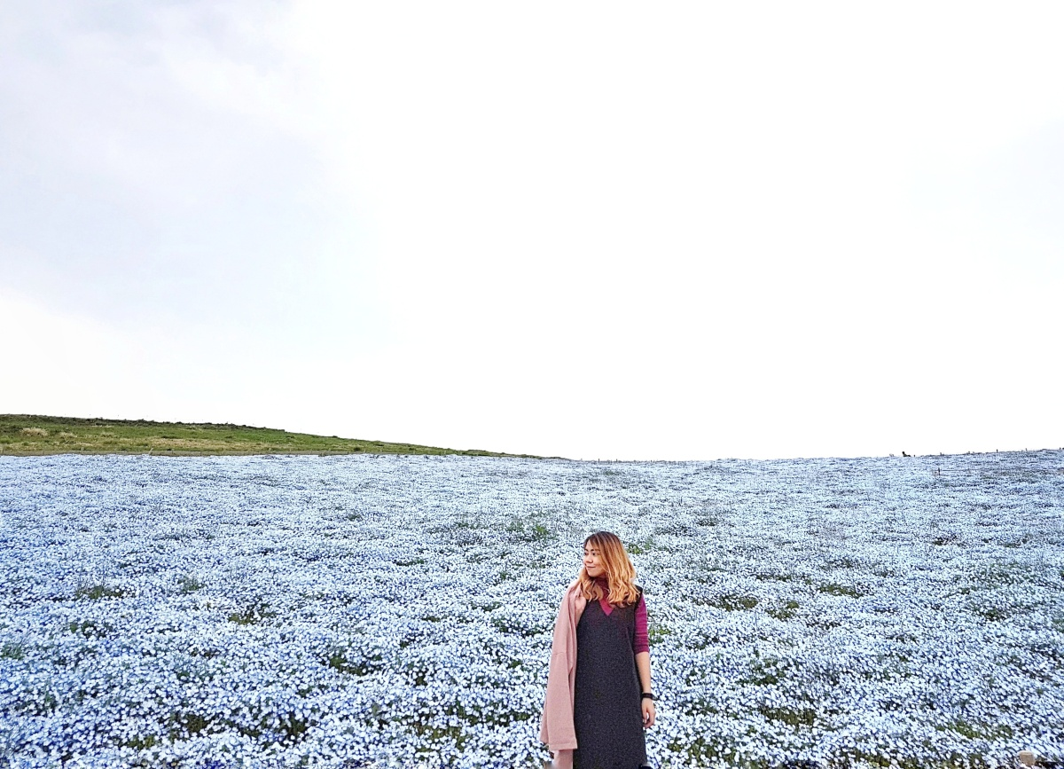 Nemophila Harmony in Hitachi Seaside Park, Ibaraki Prefecture